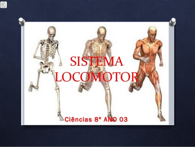 SISTEMA LOCOMOTOR Ciências 8º ANO 03