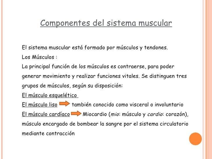 Componentes del sistema muscular El sistema muscular está formado por músculos y tendones. Los Músculos : La principal fun...