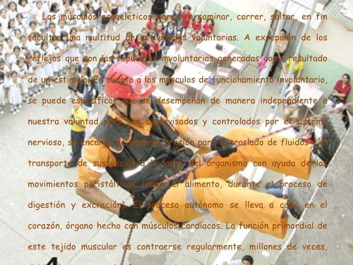 <ul><li>Los músculos esqueléticos permiten caminar, correr, saltar, en fin facultan una multitud de actividades voluntaria...