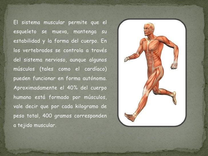 El sistema muscular permite que el esqueleto se mueva, mantenga su estabilidad y la forma del cuerpo. En los vertebrados s...