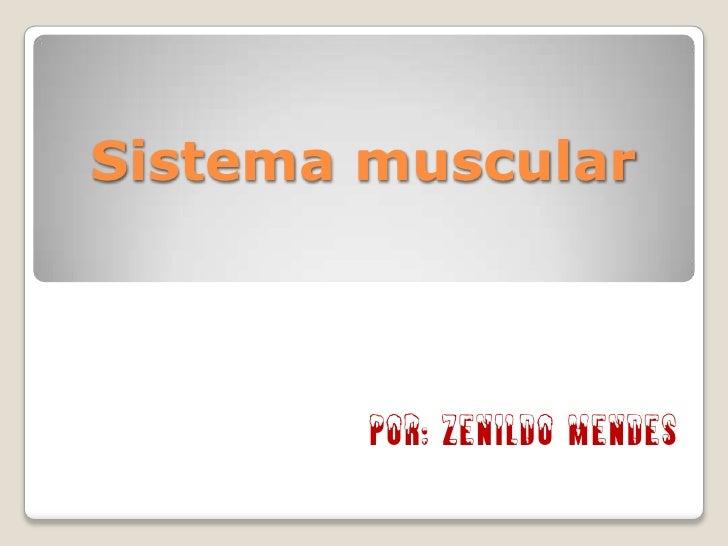 Sistema muscular<br />Por: Zenildo Mendes<br />