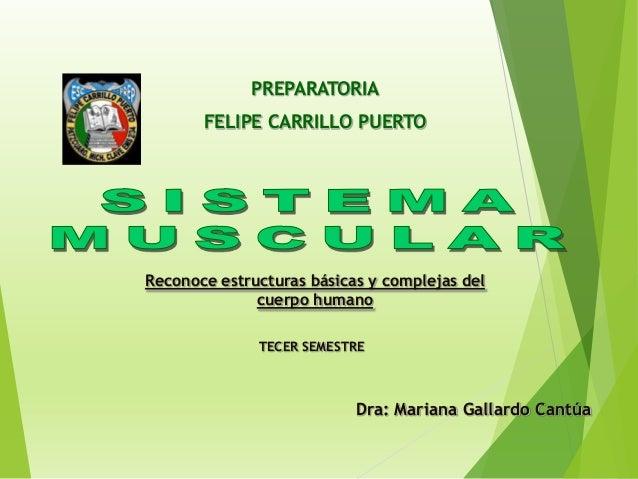 Reconoce estructuras básicas y complejas del cuerpo humano PREPARATORIA FELIPE CARRILLO PUERTO TECER SEMESTRE Dra: Mariana...