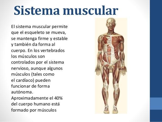sistema-muscular-2-638.jpg?cb=1429282967