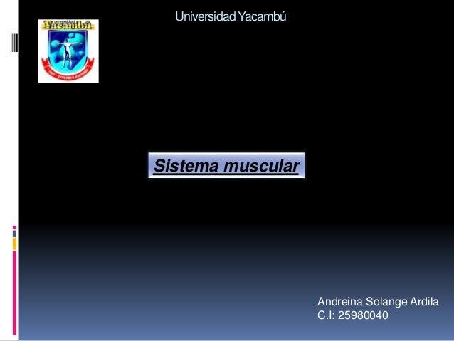 UniversidadYacambú Andreina Solange Ardila C.I: 25980040 Sistema muscular