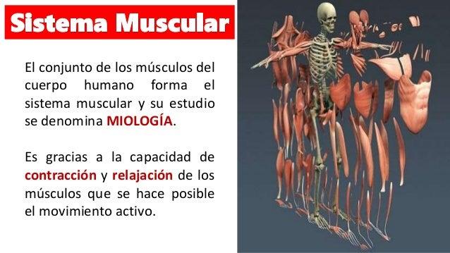 sistema-muscular-2-638.jpg?cb=1474373783