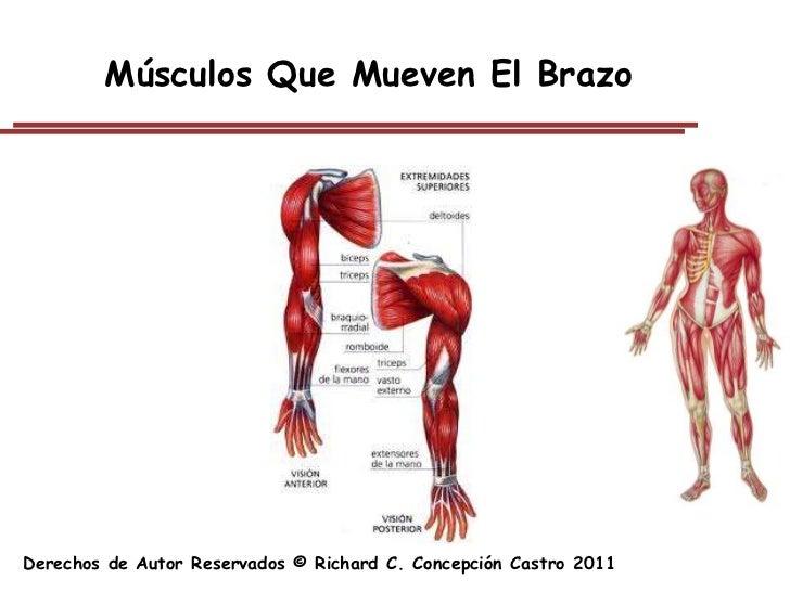 Excelente Anatomía Y Fisiología Capítulo 10 Sistema Muscular Fotos ...
