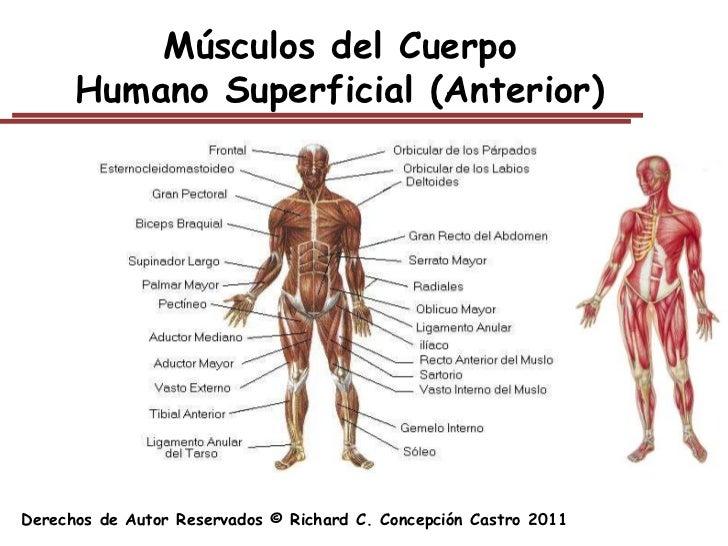Sistema Muscular Capitulo 5