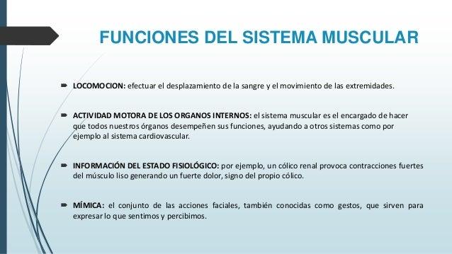 sistema-muscular-diapositivas-11-638.jpg?cb=1460688042