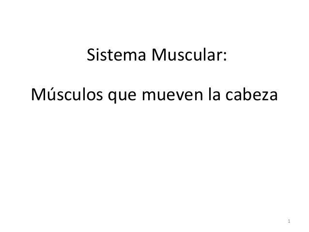Sistema Muscular: Músculos que mueven la cabeza  1