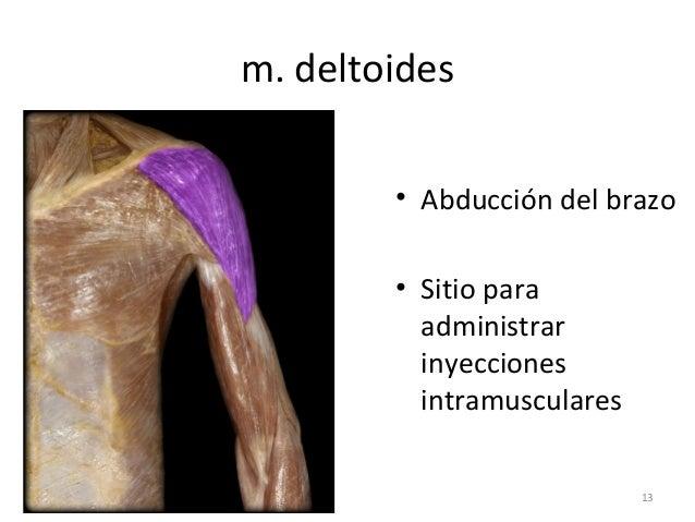 La crisis compresiva de las vértebras sheynogo del departamento de la columna vertebral