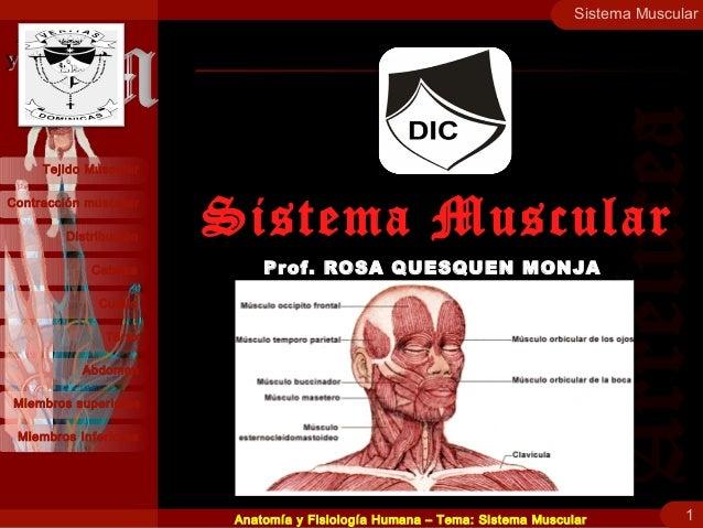 Contracción muscular Distribución Cabeza Cuello Tejido Muscular Tórax Abdomen Miembros superiores Miembros Inferiores Sist...