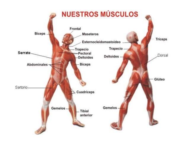 Gata El Cuidado Del Cuerpo: Sistema Muscular