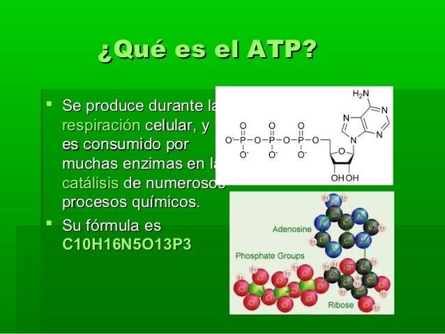 Sistema muscular for Que significa molecula
