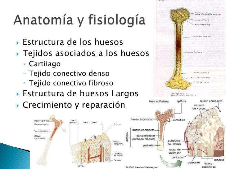 Increíble Anatomía Y Fisiología Del Sistema Muscular Ppt Bandera ...
