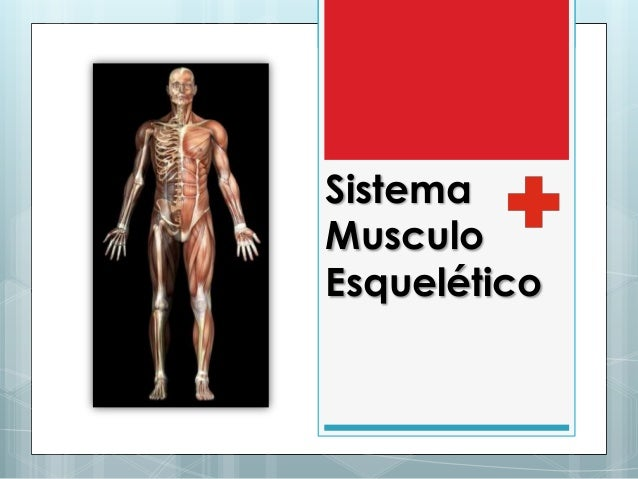 sistema-musculo-esqueltico-1-638.jpg?cb=1441908118