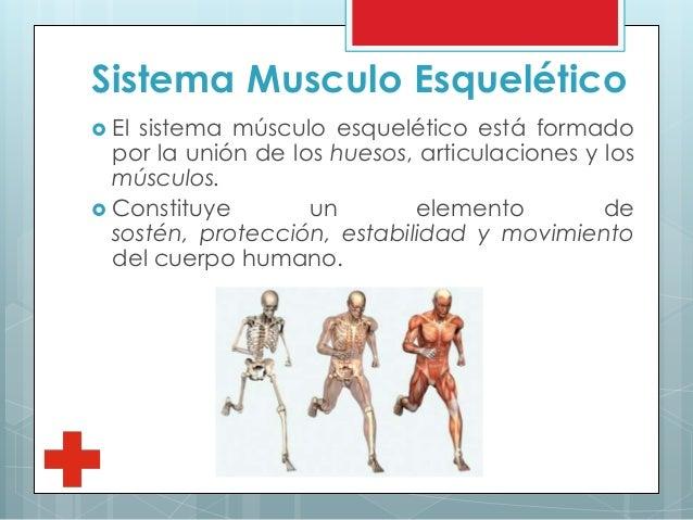 sistema-musculo-esqueltico-2-638.jpg?cb=1441908118