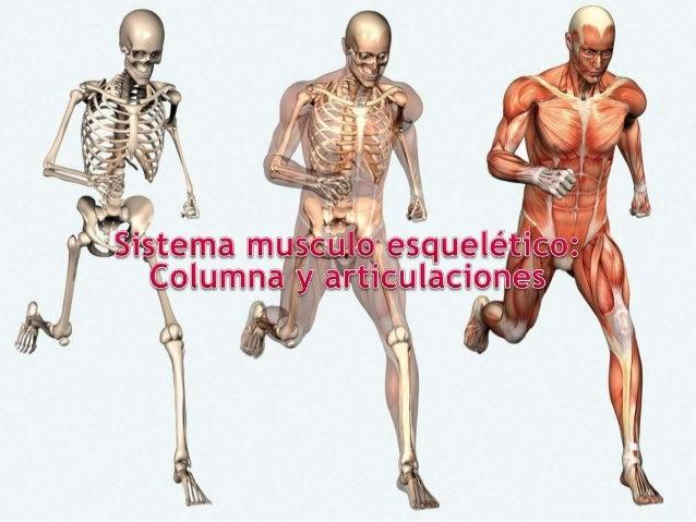Semiologia medica: Sistema musculo esquelético