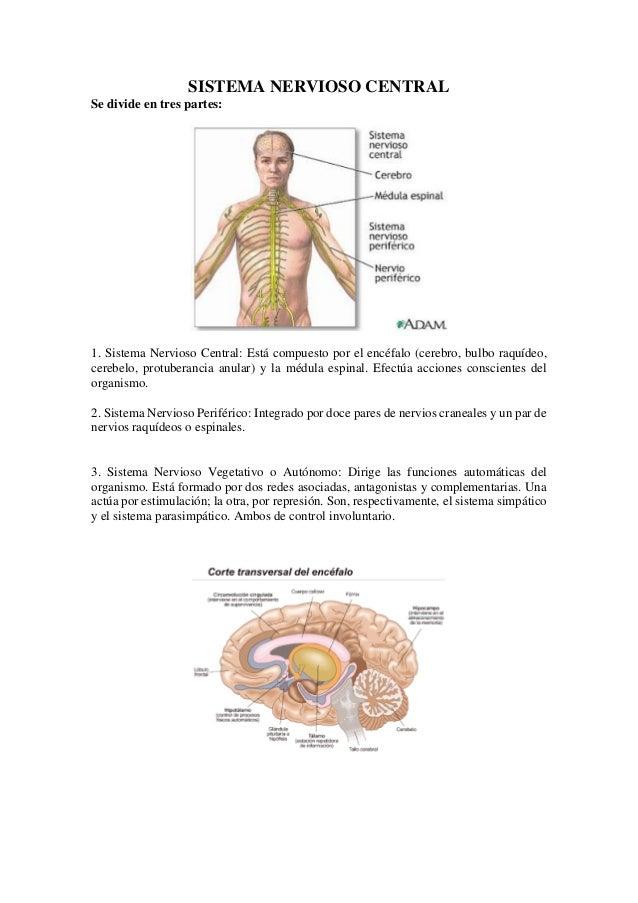 Sistema nervios cental
