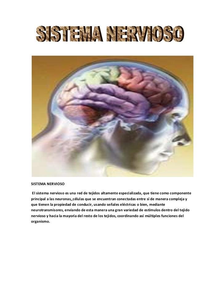 <br />SISTEMA NERVIOSO <br /> Elsistema nerviosoes una red detejidosaltamente especializada, que tiene como compo...