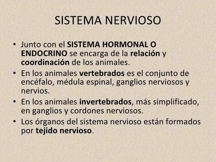 SISTEMA NERVIOSO <ul><li>Junto con el  SISTEMA HORMONAL O ENDOCRINO  se encarga de la  relación  y  coordinación  de los a...