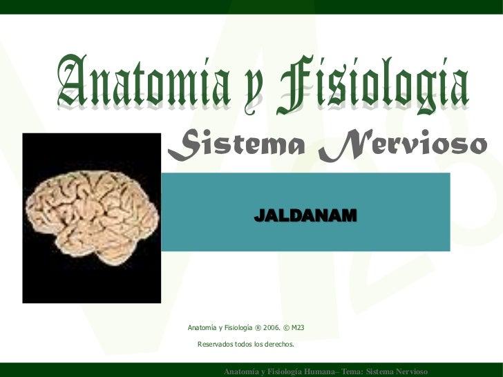 Sistema Nervioso Wilson JALDANAM         Yuptón   Carrasco.     Anatomía y Fisiología ® 2006. © M23       Reservados todos...