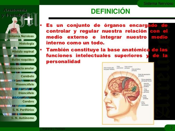 Sistema nervioso Slide 2