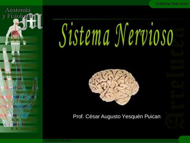 c Médula espinal Bulbo raquídeo Protuberancia anular Cerebelo Histología Sistema Nervioso ´Mesencéfalo Diencéfalo Cerebro ...