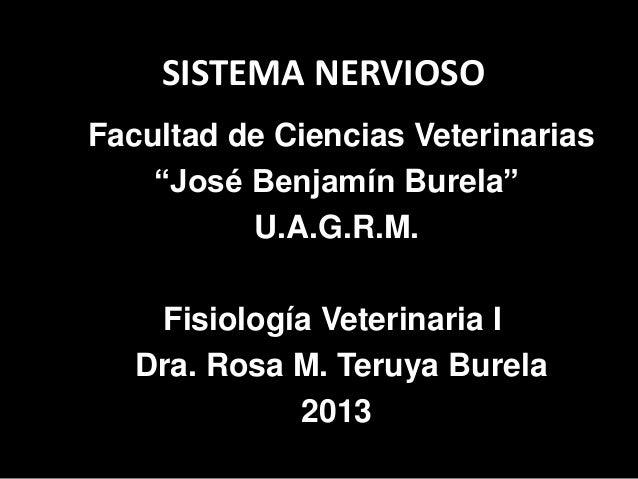 """SISTEMA NERVIOSOFacultad de Ciencias Veterinarias    """"José Benjamín Burela""""          U.A.G.R.M.    Fisiología Veterinaria ..."""