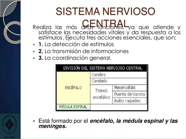 Anatomía y fisiología de sistema nervioso