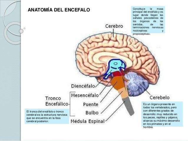 Sistema nervioso, tarea 2