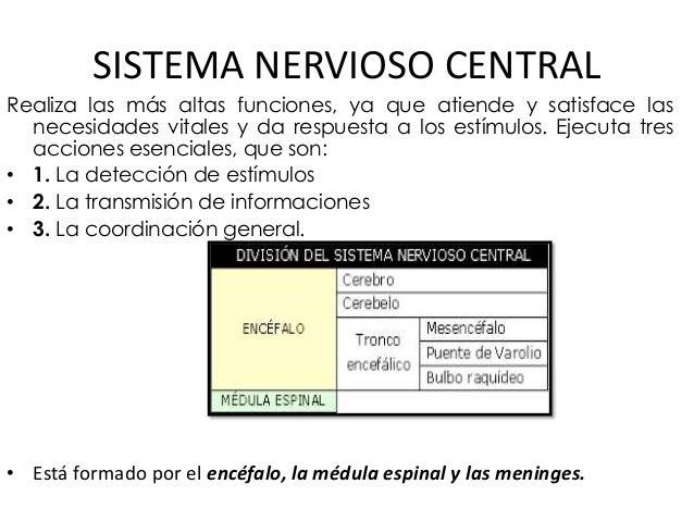 SISTEMA NERVIOSO CENTRAL Realiza las más altas funciones, ya que atiende y satisface las necesidades vitales y da respuest...
