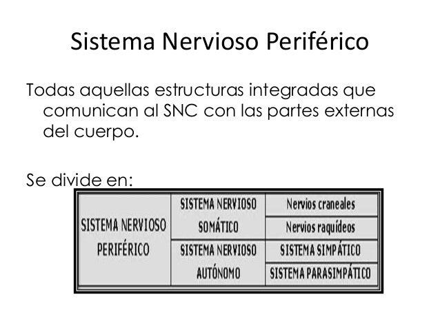 Sistema Nervioso Periférico Todas aquellas estructuras integradas que comunican al SNC con las partes externas del cuerpo....