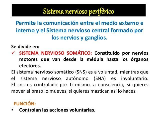 Sistema nervioso periférico Permite la comunicación entre el medio externo e interno y el Sistema nervioso central formado...
