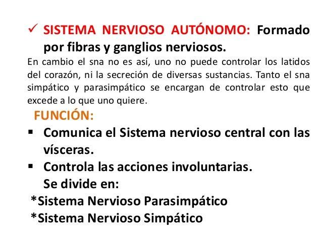  SISTEMA NERVIOSO AUTÓNOMO: Formado por fibras y ganglios nerviosos. En cambio el sna no es así, uno no puede controlar l...