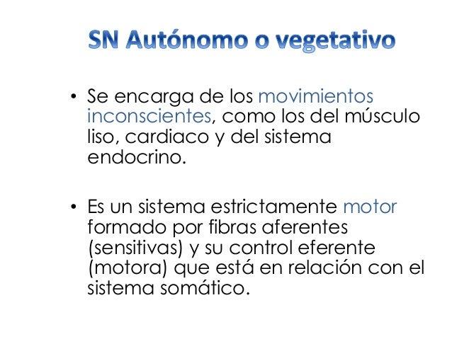 • Se encarga de los movimientos inconscientes, como los del músculo liso, cardiaco y del sistema endocrino. • Es un sistem...