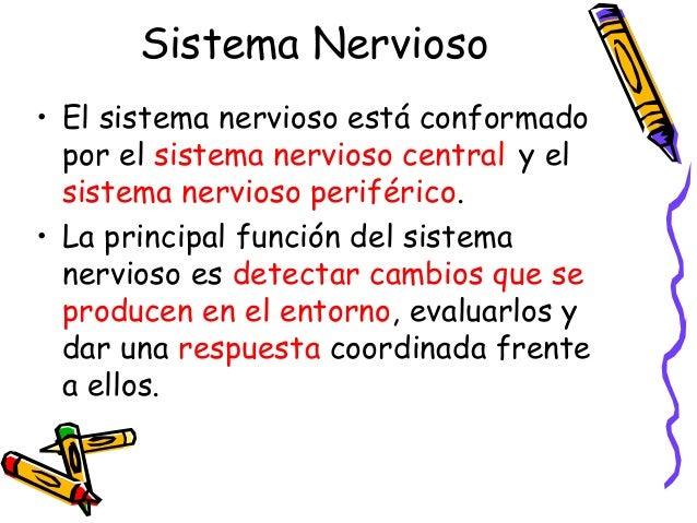 Sistema Nervioso • El sistema nervioso está conformado por el sistema nervioso central y el sistema nervioso periférico. •...