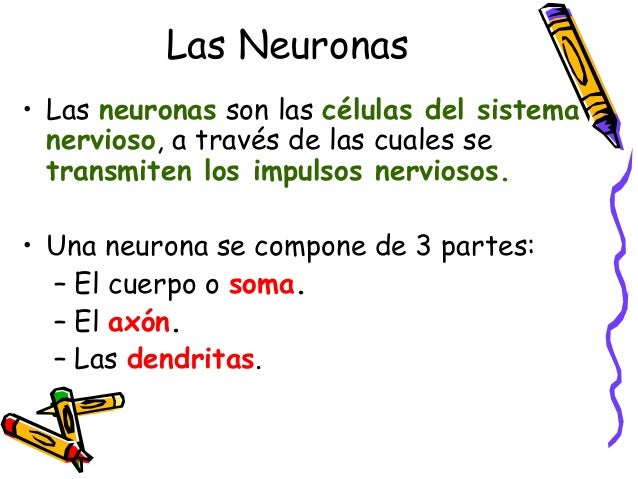 Las Neuronas • Las neuronas son las células del sistema nervioso, a través de las cuales se transmiten los impulsos nervio...