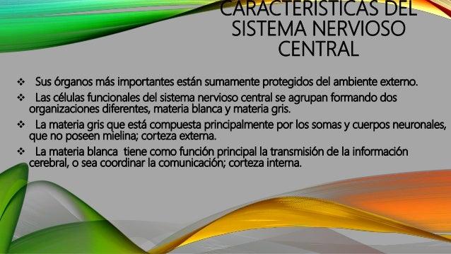 CARACTERÍSTICAS DEL SISTEMA NERVIOSO CENTRAL  Sus órganos más importantes están sumamente protegidos del ambiente externo...