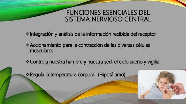 FUNCIONES ESENCIALES DEL SISTEMA NERVIOSO CENTRAL Integración y análisis de la información recibida del receptor. Accion...