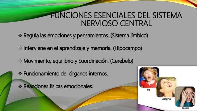 FUNCIONES ESENCIALES DEL SISTEMA NERVIOSO CENTRAL  Regula las emociones y pensamientos. (Sistema límbico)  Interviene en...