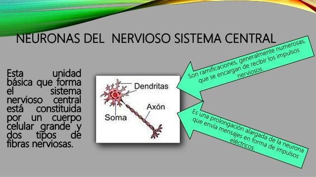 NEURONAS DEL NERVIOSO SISTEMA CENTRAL Esta unidad básica que forma el sistema nervioso central está constituida por un cue...
