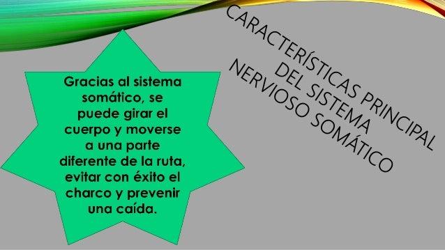 SISTEMA NERVIOSO AUTÓNOMO O NEUROVEGETATIVO Este sistema transmite impulsos nerviosos desde el sistema nervioso central ha...