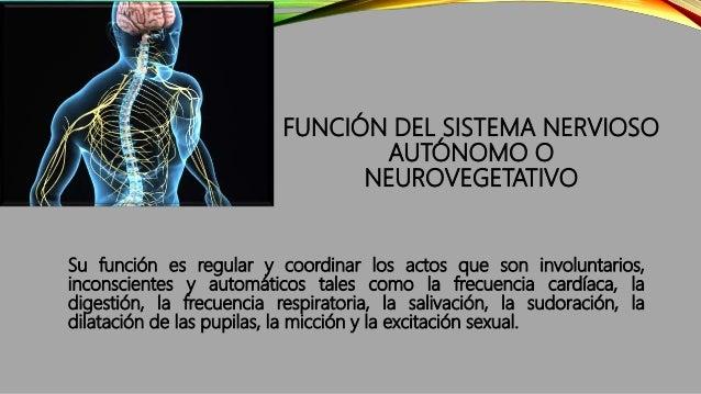 SISTEMA NERVIOSO ENTÉRICO Las neuronas del SNE se recogen en dos tipos de ganglios:  Plexos mientéricos  Plexos submucos...