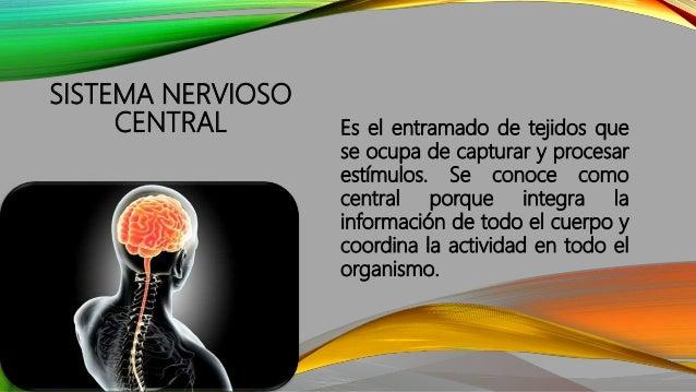 SISTEMA NERVIOSO CENTRAL Es el entramado de tejidos que se ocupa de capturar y procesar estímulos. Se conoce como central ...