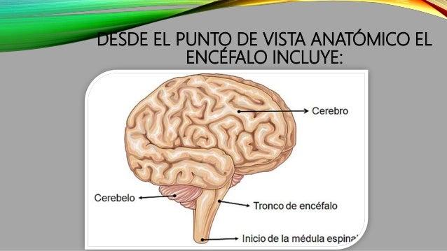 DESDE EL PUNTO DE VISTA ANATÓMICO EL ENCÉFALO INCLUYE:
