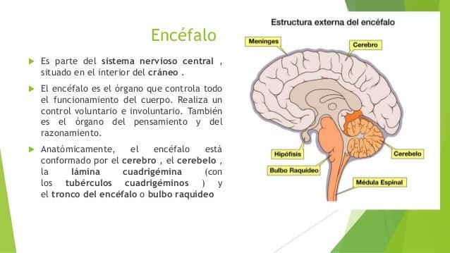 Sistema Nervioso Por Jessica Pazmiño