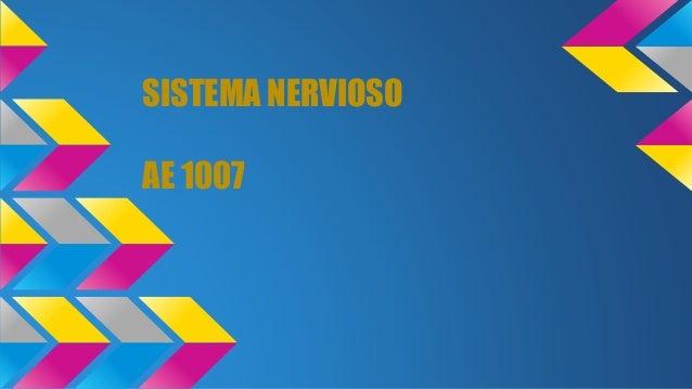 SISTEMA NERVIOSO AE 1007