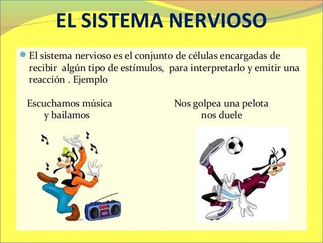 Sistema nervioso para 5° y 6° de primaria  2013 Slide 2