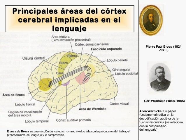 Sistema nervioso anatomia y fisiologia