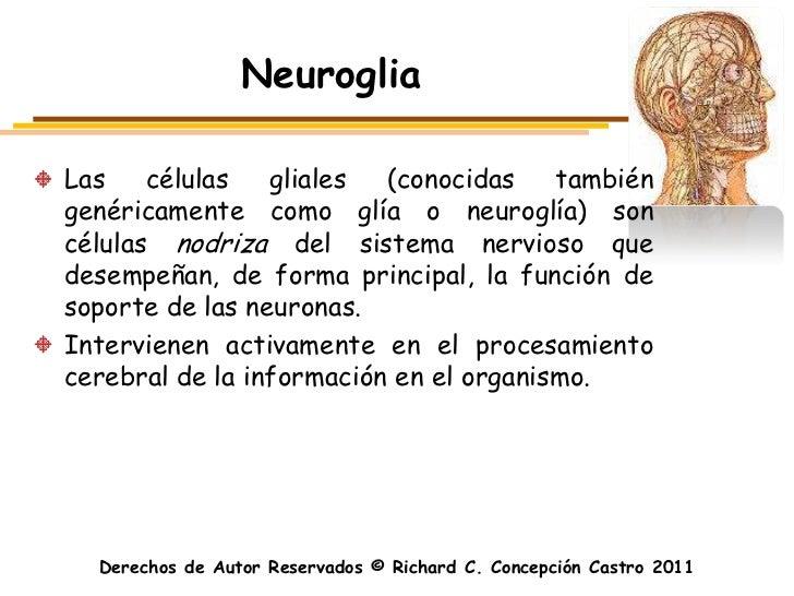 NeurogliaLas    células   gliales  (conocidas    tambiéngenéricamente como glía o neuroglía) soncélulas nodriza del sistem...